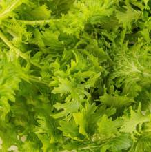 Plantui Mustard Wasabina, 3 kapsle, hořčice indická Wasabina (brukev sítinovitá 'Wasabina')