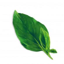 Plantui Basil Thai, 3 kapsle, bazalka thajská